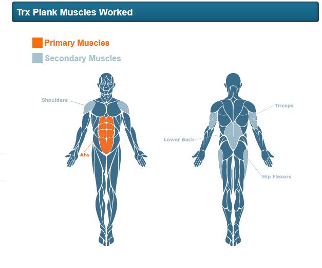 TRX Plank pratimo atlkimo metu dirbantys raumenys