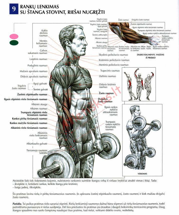 Štangos lenkimas bicepsui atsistojus technikos paaiškinimas