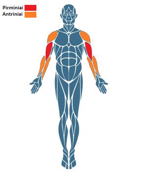 Rankų lenkimo bicepsams pratimas