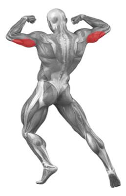 Trigalviai žasto raumenys