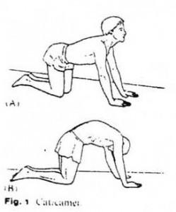 Nugaros-tiesiamųjų-raumenų-tempimo-pratimas