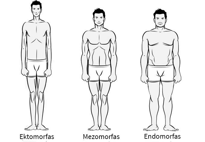 Vyrų kūno tipai